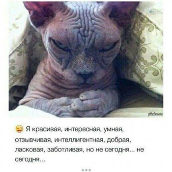 Про сфинксов - Ютуб - Кот скиф - исподлобья.jpg